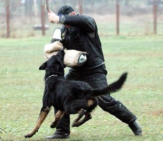 дресссировка собак